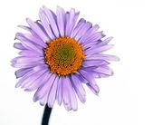 Flora against white background — Stock Photo