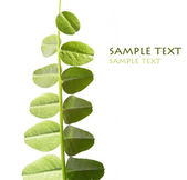 Young green leaves against white background and plenty of space for text — Stock Photo