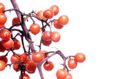 Lovely red berries against white background — Stock Photo
