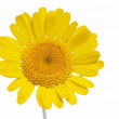 Beautiful yellow flower against white background — Stock Photo #10467557