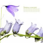 Lovely spring flora against white background — Stock Photo #10526570