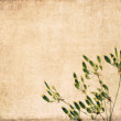 Lovely earthy background image and design element — ストック写真