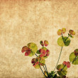 Lovely background image with floral elements — Stock Photo #10526794