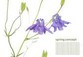Nieuw begin. opkomende voorjaar bloem. — Stockfoto