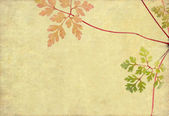 Floral background with earthy texture — Stock Photo