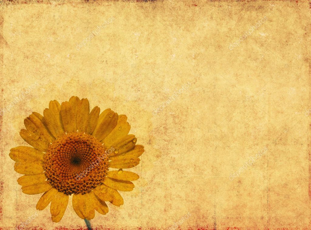 Earthy floral background image and useful design element  Stock Photo #10526786