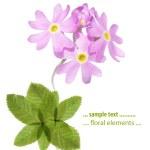 Spring flora — Stock Photo #9764600