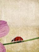 Mooie aardse achtergrond en design element met lieveheersbeestje — Stockfoto