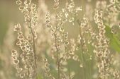Flora background (very shallow depth of field) — Stock Photo