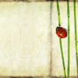 Lovely background image with ladybird and floral elements. useful design element. — Stock Photo #9827871