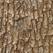 Wooden texture — Stock Photo #9829472