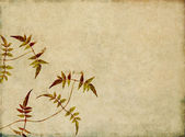 Earthy floral design element — Stock Photo
