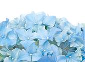 Spring flora — Stock Photo
