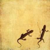 Earthy background image with salamanders up close — Stock Photo