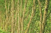 деревья абстрактного — Стоковое фото