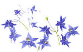 Hermosa flora contra fondo blanco — Foto de Stock