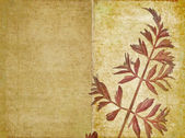 Lovely background image with floral elements. useful design element. — Stock Photo