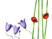 Flora and ladybird against white background. useful design element. — Stock Photo