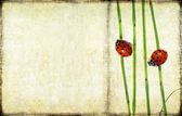 Lovely background image with ladybird and floral elements. useful design element. — Stock Photo