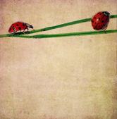 土黄色背景图像与花卉元素和瓢虫 — 图库照片