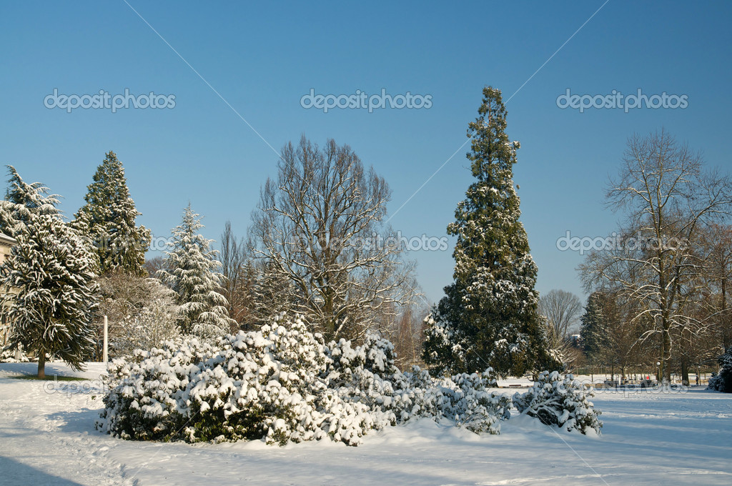 Winter landscape — Stock Photo #9826655