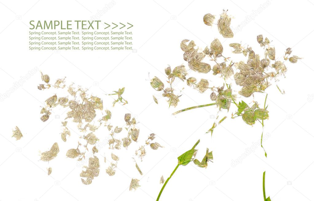 Lovely spring flora against white background — Stock Photo #9827251