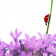 Colorful illustration with floral elements and ladybird. useful design element. — Stock Photo #9862710