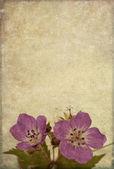 Image de fond terreux avec éléments floraux. élément de design utile. — Photo