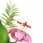 concetto di primavera — Foto Stock