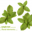 Flora against white background. useful design element. — Stock Photo