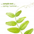 Spring concept. flora against white background. — Stock Photo