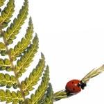 concetto di primavera. flora e coccinella su sfondo bianco — Foto Stock
