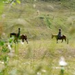 Two anonymous horse riders in a field in the swiss alps — Stock Photo