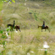 Two anonymous horse riders in a field in the swiss alps - Stock Photo