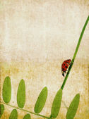 Lovely earthy background and design element with ladybird — Stock Photo