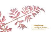 Lovely floral design element — Stock Photo