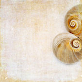 Light brown background image with close-up of a snail and plenty of space for text — Stock Photo