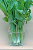 A glass vase filled with tulips against light brown background — Stock Photo