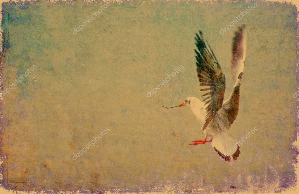 Seagull grunge background with plenty of copy space — Stock Photo #9956051