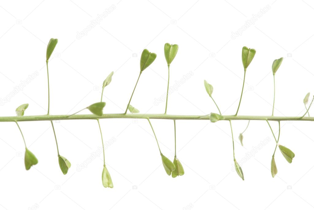 Spring concept. flora against white background. — Stock Photo #9957687