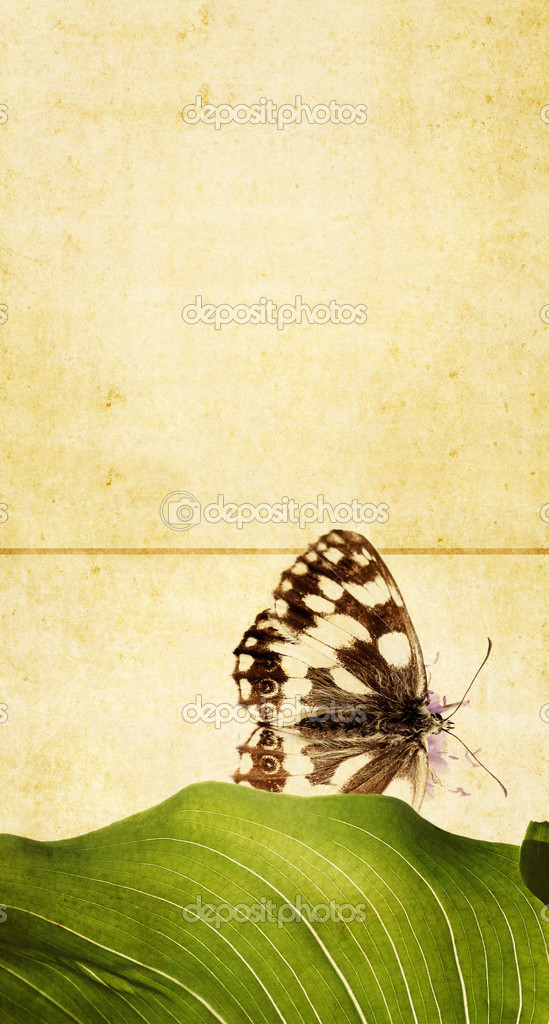 Lovely background image with floral elements and butterfly. very useful design element. — Stock Photo #9958758