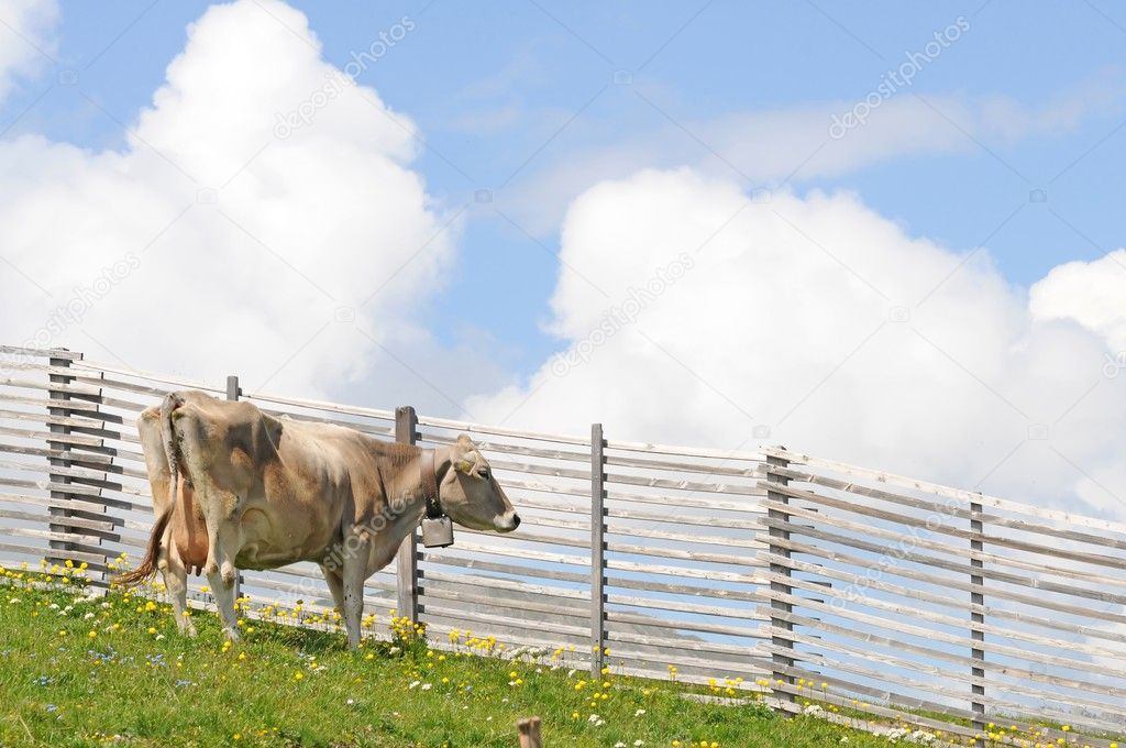 Green meadow with cows — Stock Photo #9958875