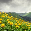 Meadows of Abkhazia — Stock Photo