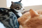 Cute cat looking the window — Стоковое фото