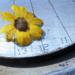 Daisy on a metal base — Stock Photo