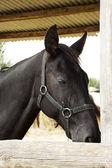 Equine portrait — Stock Photo