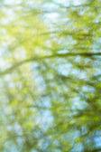 Textura stromy odráží ve vodě — Stock fotografie