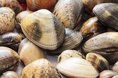 Scene clams steamed — Stock Photo
