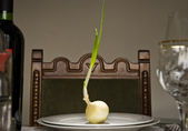 Onion Feast — Stock Photo