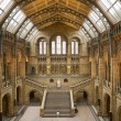 Natural History Museum Main Hall — Stock Photo